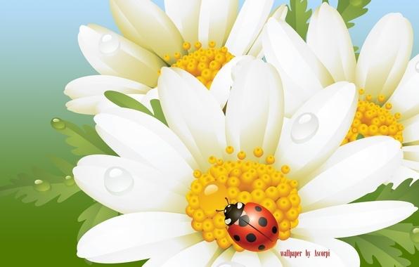 Ромашка с божьей коровкой   красивые картинки 012