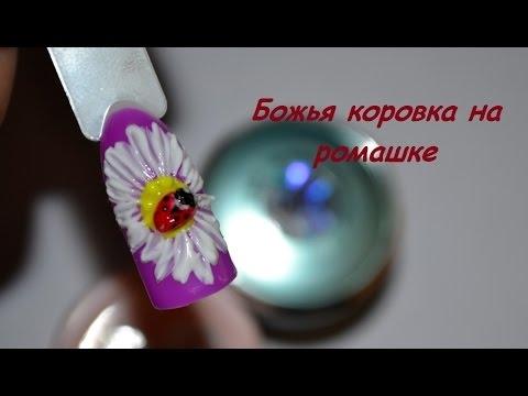 Ромашка с божьей коровкой   красивые картинки 015