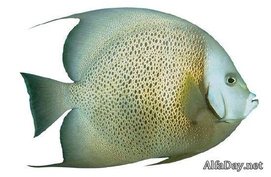 Рыбка картинка на прозрачном фоне для детей 019