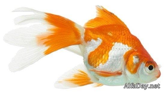 Рыбка на прозрачном фоне картинки для детей 005