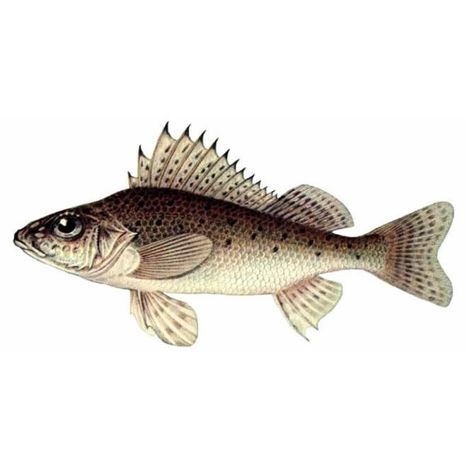 Рыбка на прозрачном фоне картинки для детей 012