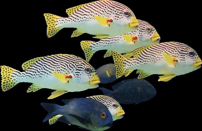 Рыбка на прозрачном фоне картинки для детей 014
