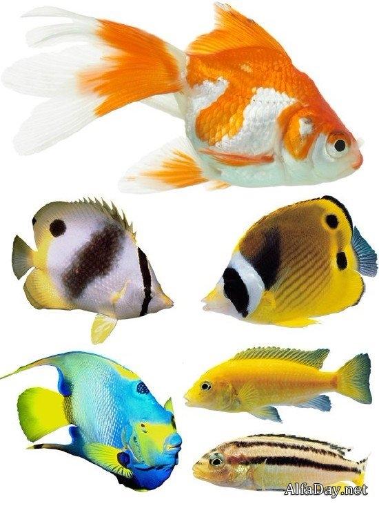 Рыбка на прозрачном фоне картинки для детей 019
