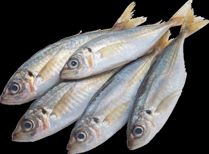 Рыбка на прозрачном фоне картинки для детей 020