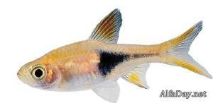 Рыбка на прозрачном фоне картинки для детей 023