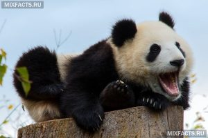 Самые красивые животные мира   фото и названия (6)