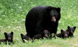 Семьи животных картинки для детей   подборка 020