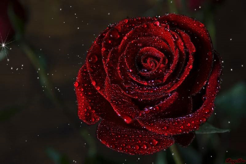 Сердце из роз картинки и фото   подборка 018