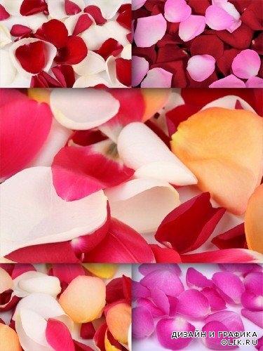 Сердце из роз картинки и фото   подборка 021