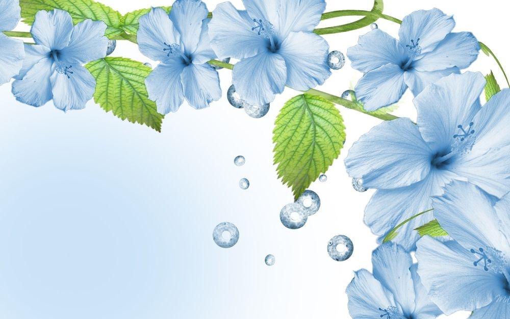 Синие цветы на белом фоне   фото 004