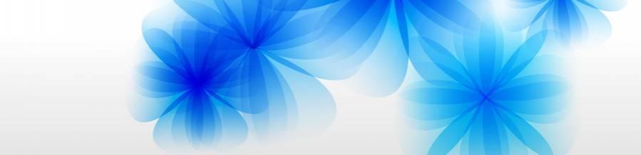 Синие цветы на белом фоне   фото 005