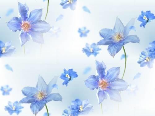 Синие цветы на белом фоне   фото 012