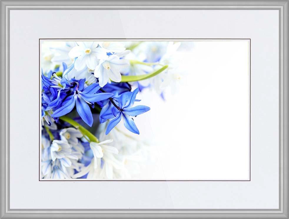 Синие цветы на белом фоне   фото 013