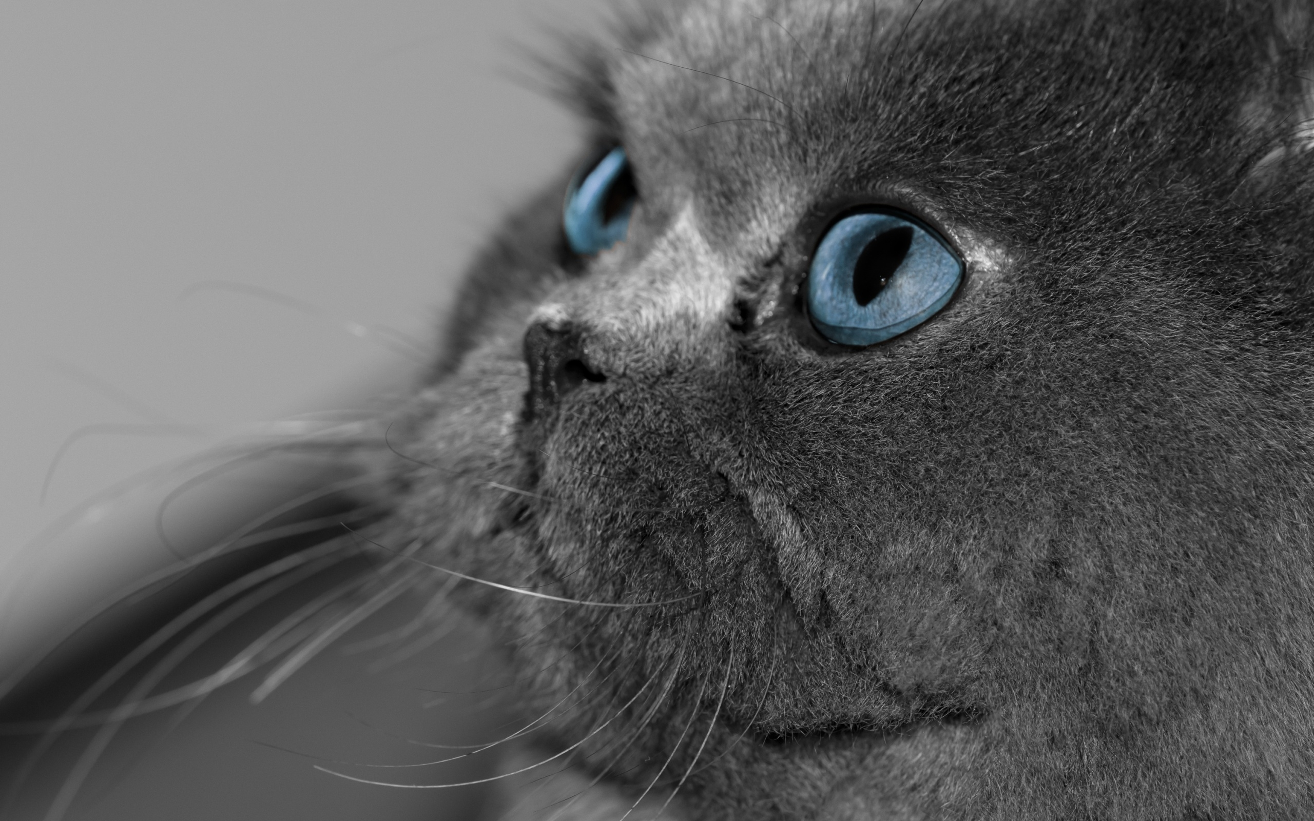Скачать бесплатно картинки котят на телефон   лучшие заставки (18)