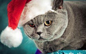 Скачать бесплатно картинки котят на телефон   лучшие заставки (19)