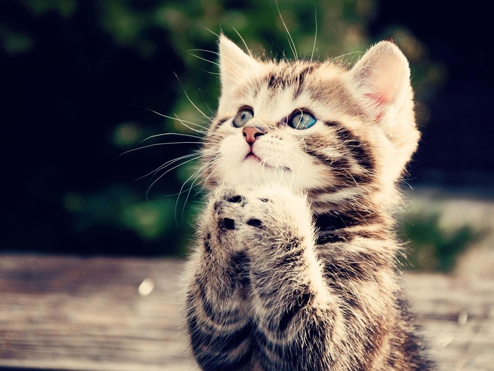 Скачать бесплатно картинки котят на телефон   лучшие заставки (6)