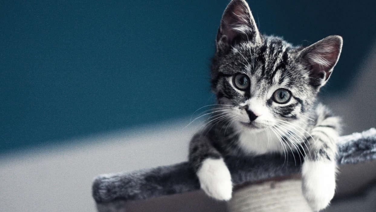 Скачать бесплатно картинки котят на телефон   лучшие заставки (7)