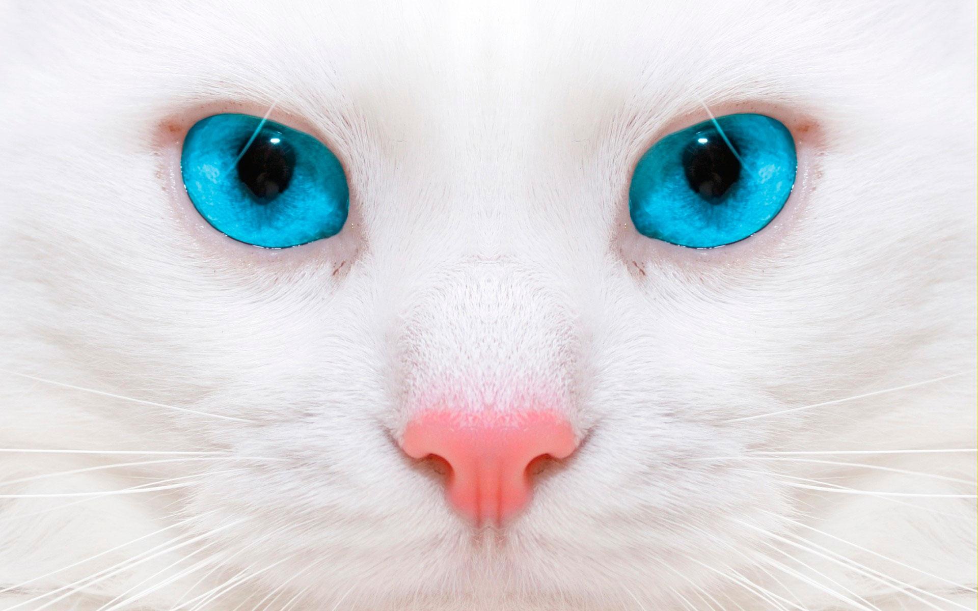 Скачать бесплатно картинки котят на телефон   лучшие заставки (8)