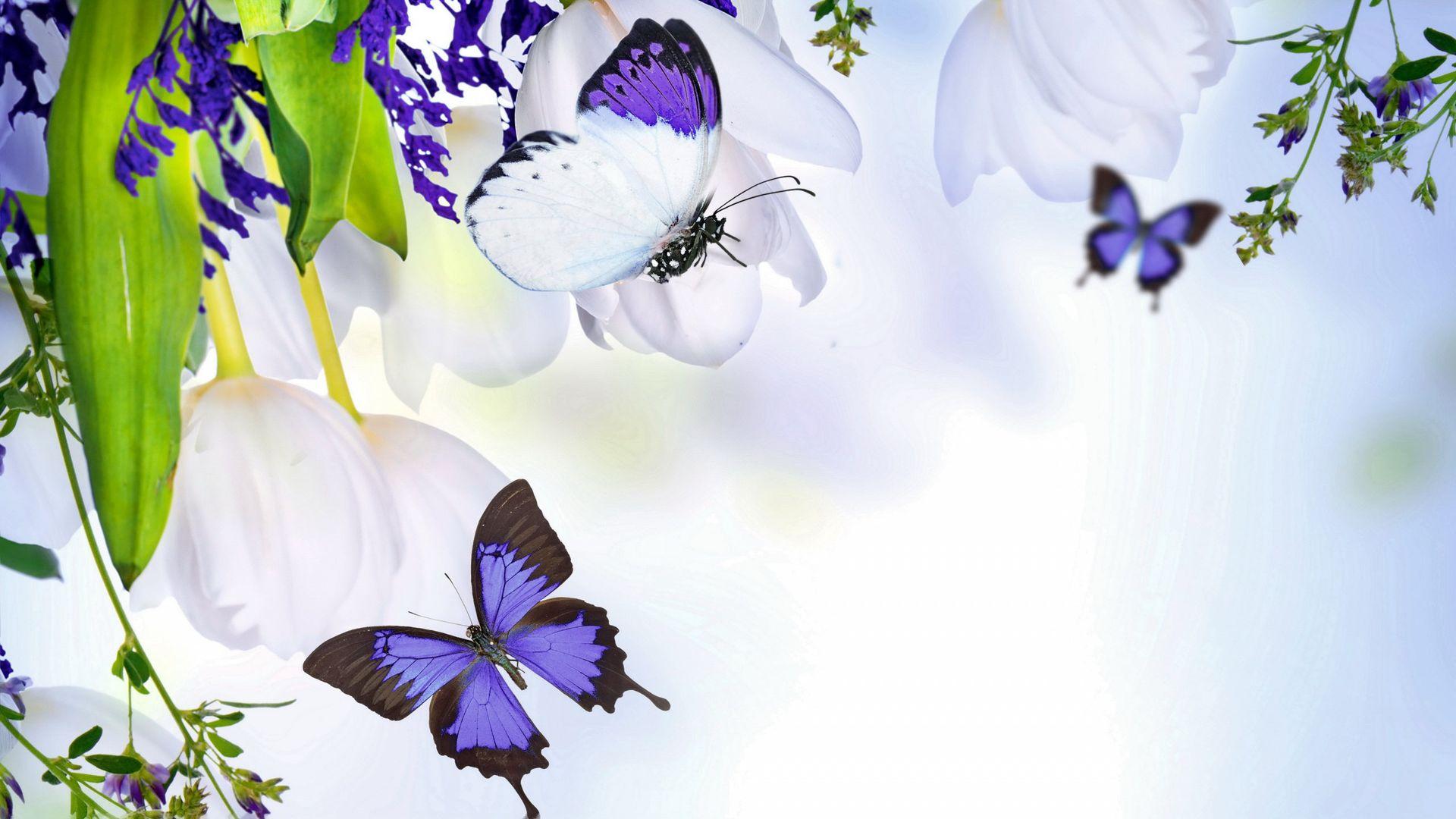 Скачать бесплатно обои бабочки на рабочий стол   подборка (11)