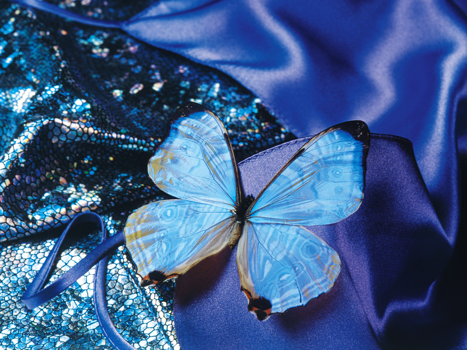 Скачать бесплатно обои бабочки на рабочий стол   подборка (12)