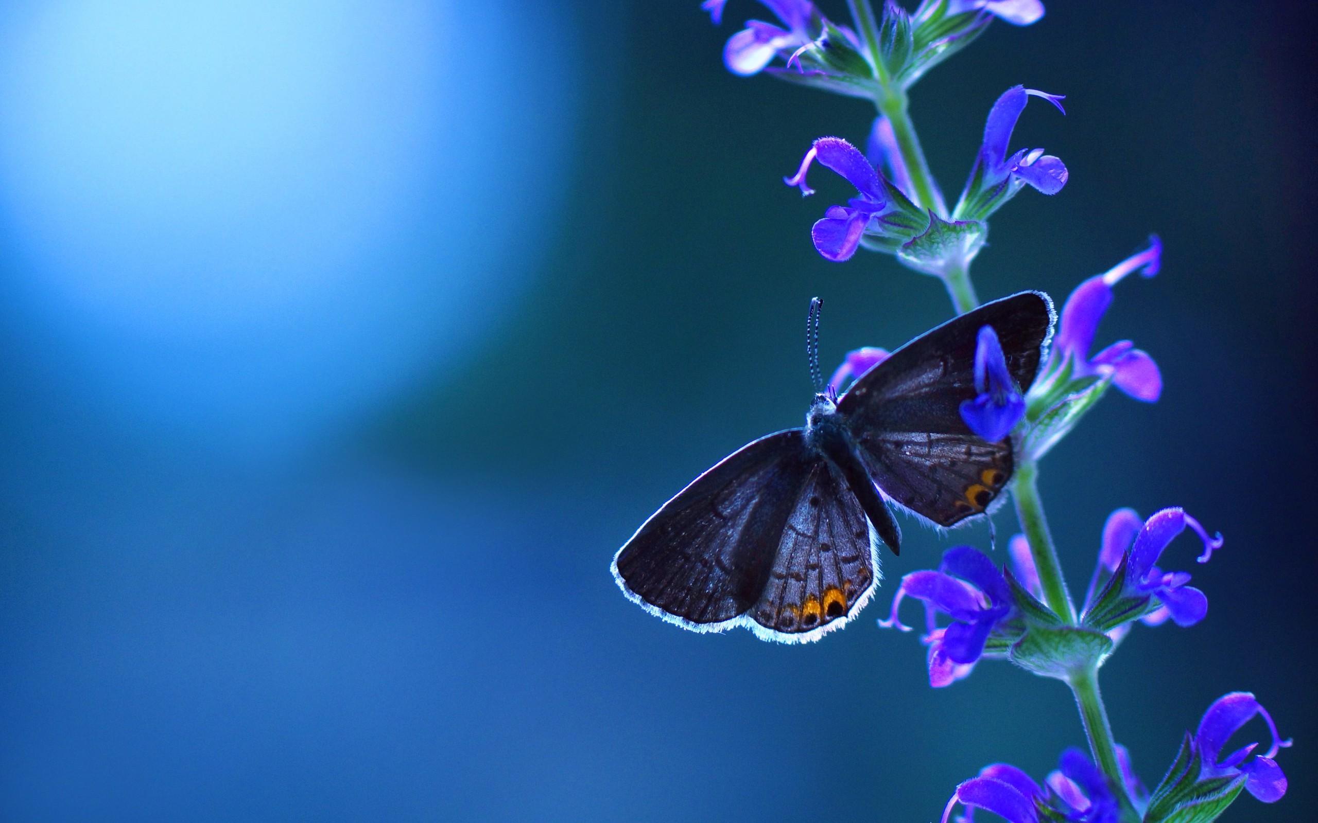 Скачать бесплатно обои бабочки на рабочий стол   подборка (13)