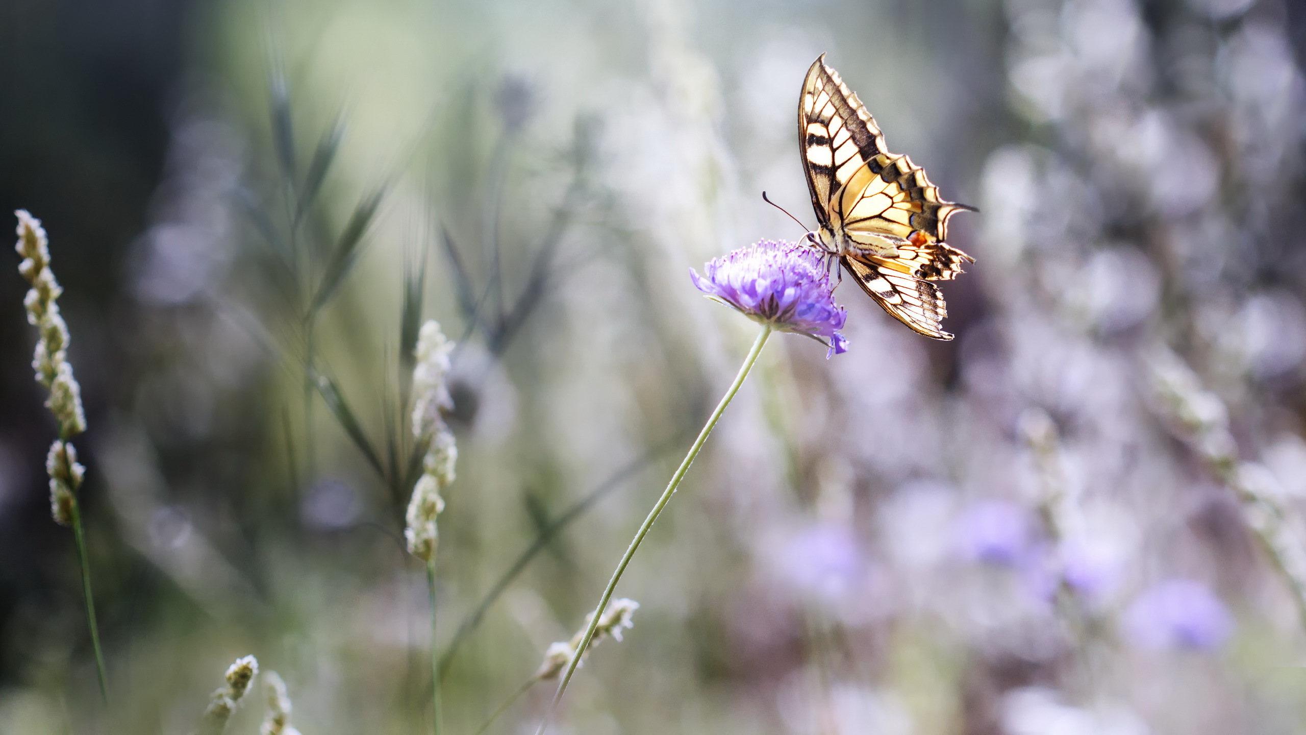 Скачать бесплатно обои бабочки на рабочий стол   подборка (25)