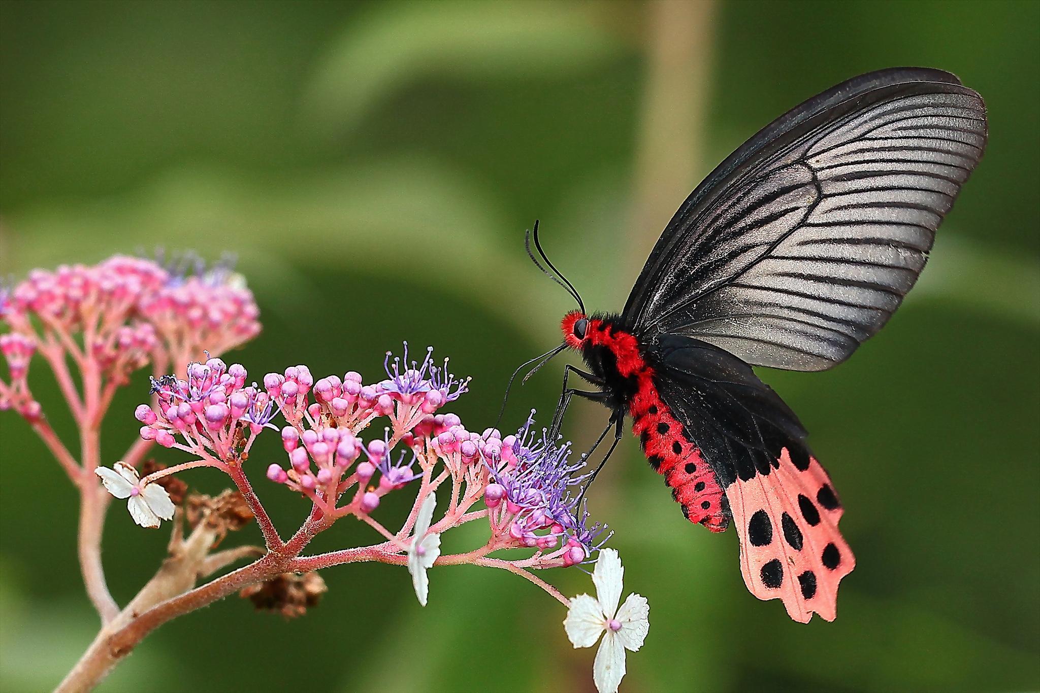 Скачать бесплатно обои бабочки на рабочий стол   подборка (28)