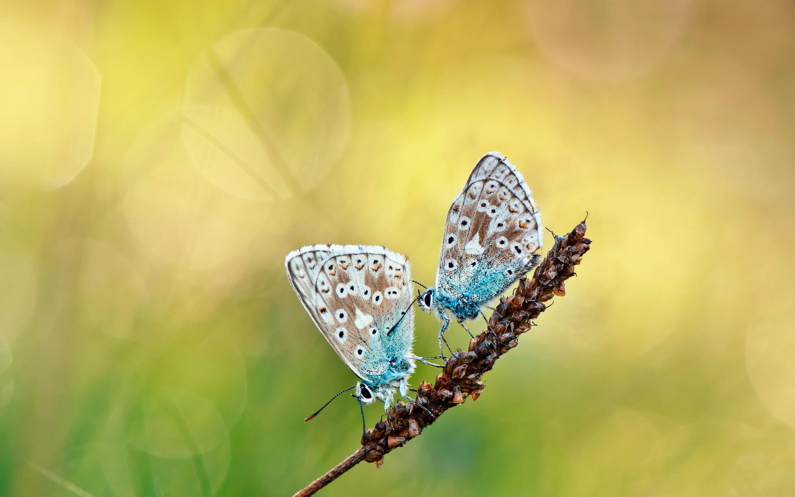 Скачать бесплатно обои бабочки на рабочий стол   подборка (3)
