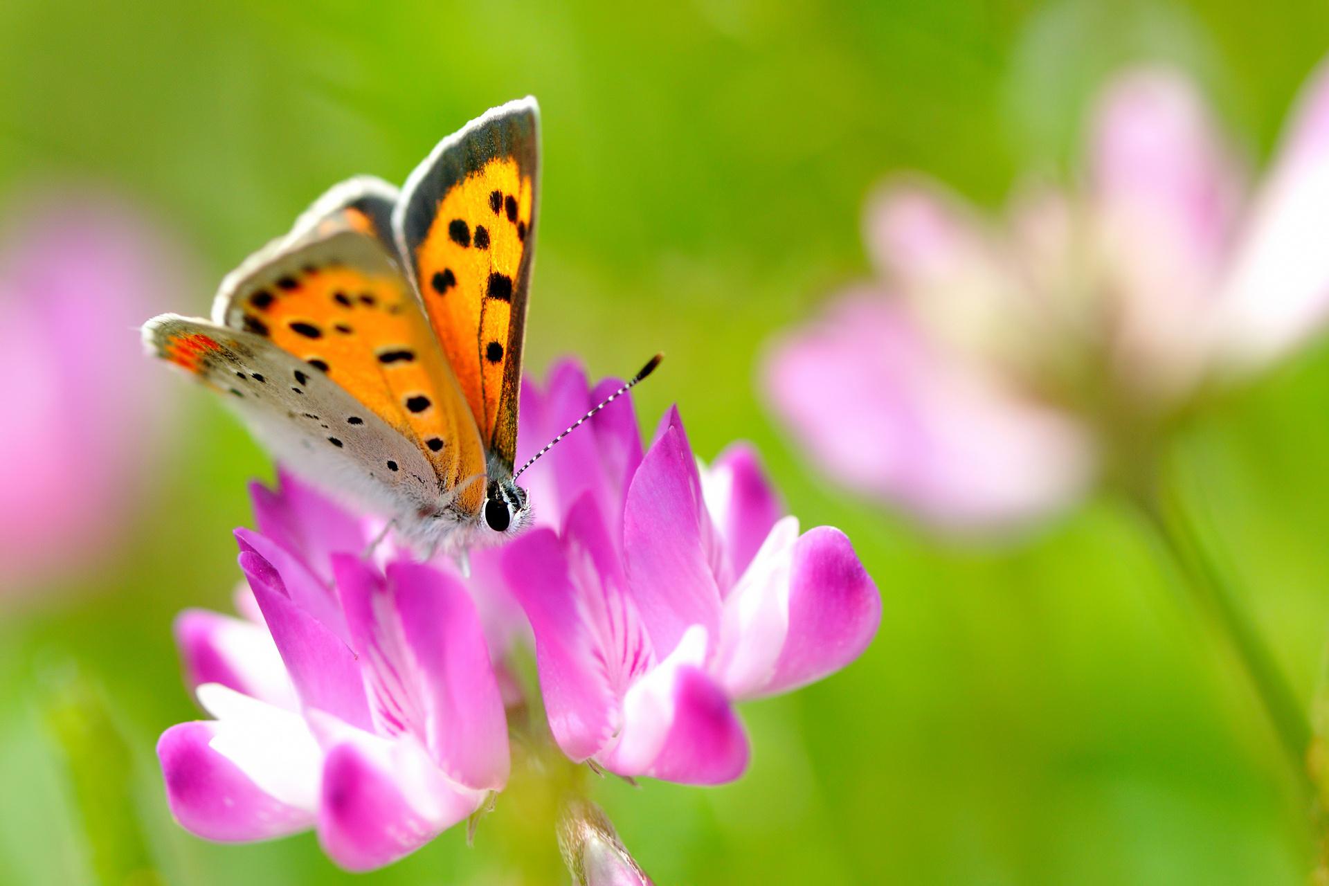Скачать бесплатно обои бабочки на рабочий стол   подборка (32)