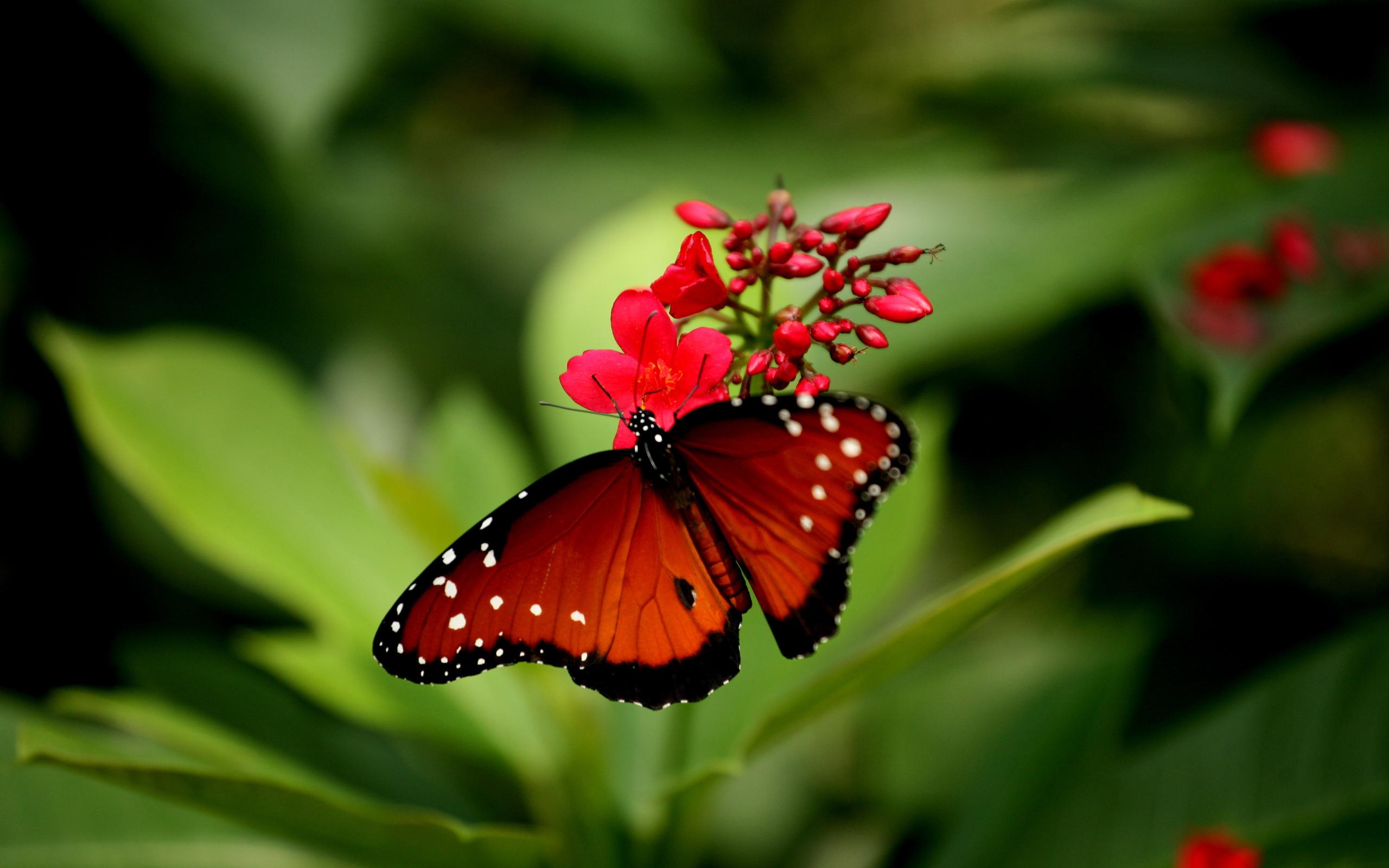 Скачать бесплатно обои бабочки на рабочий стол   подборка (34)