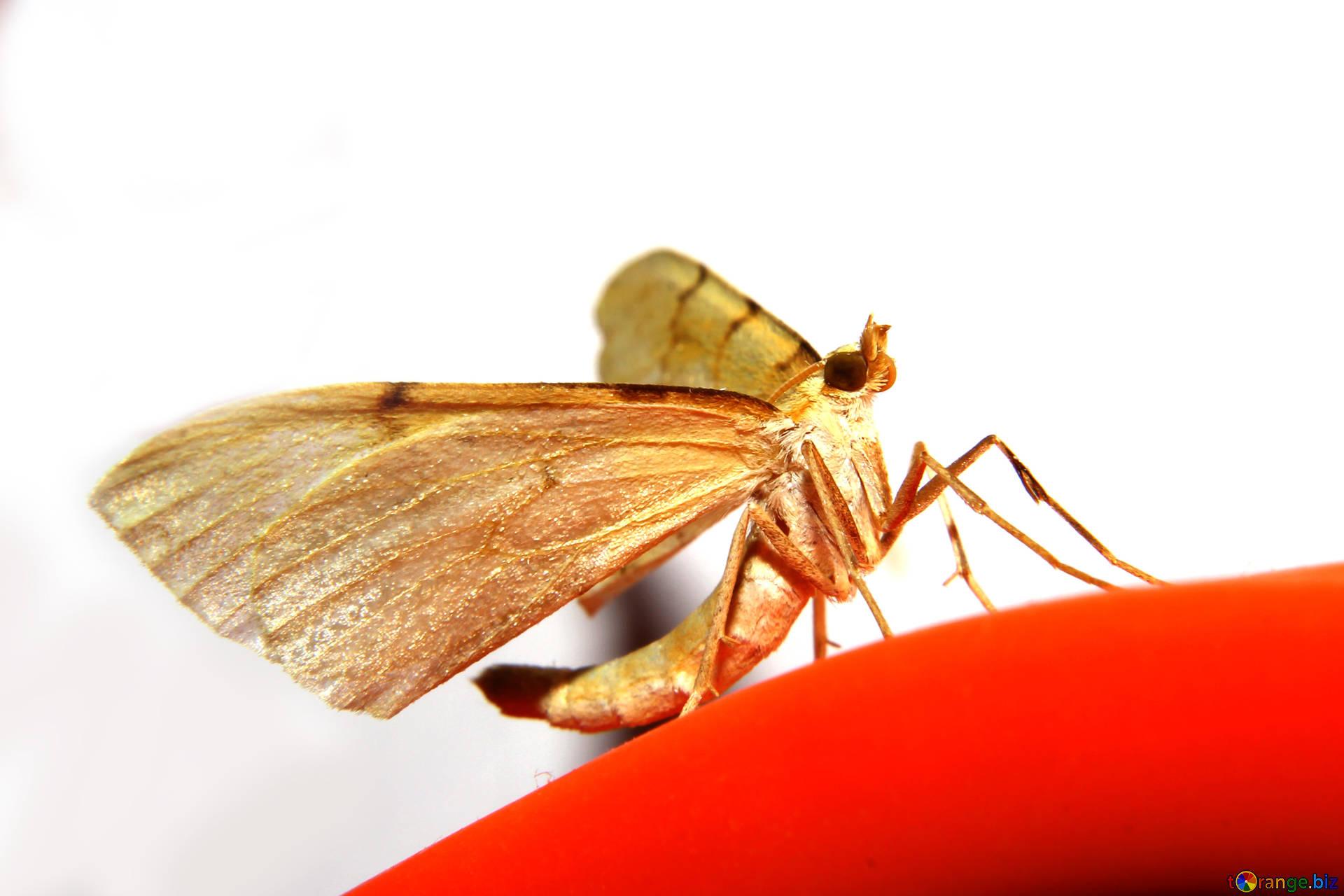 Скачать бесплатно обои бабочки на рабочий стол   подборка (36)