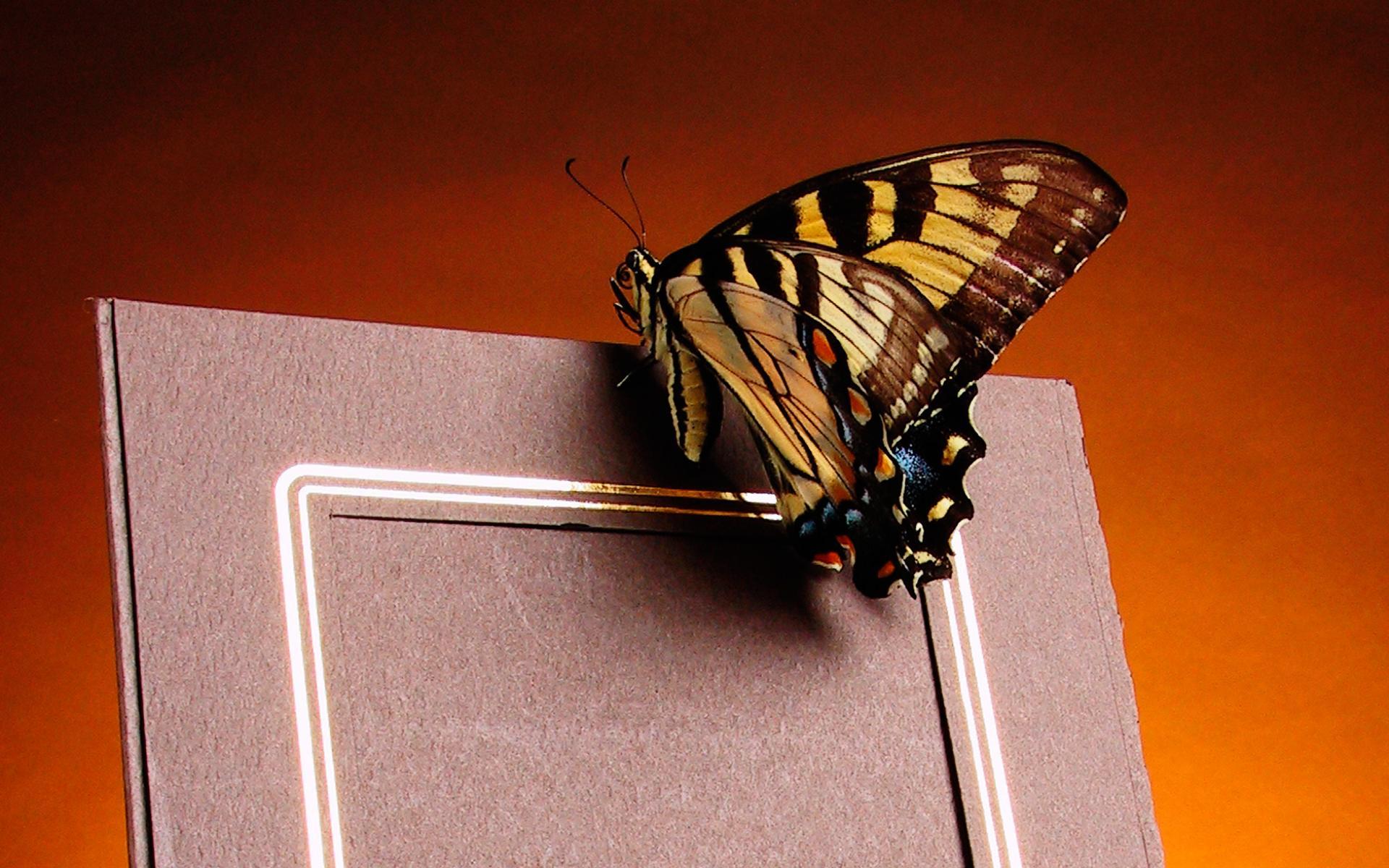 Скачать бесплатно обои бабочки на рабочий стол   подборка (37)