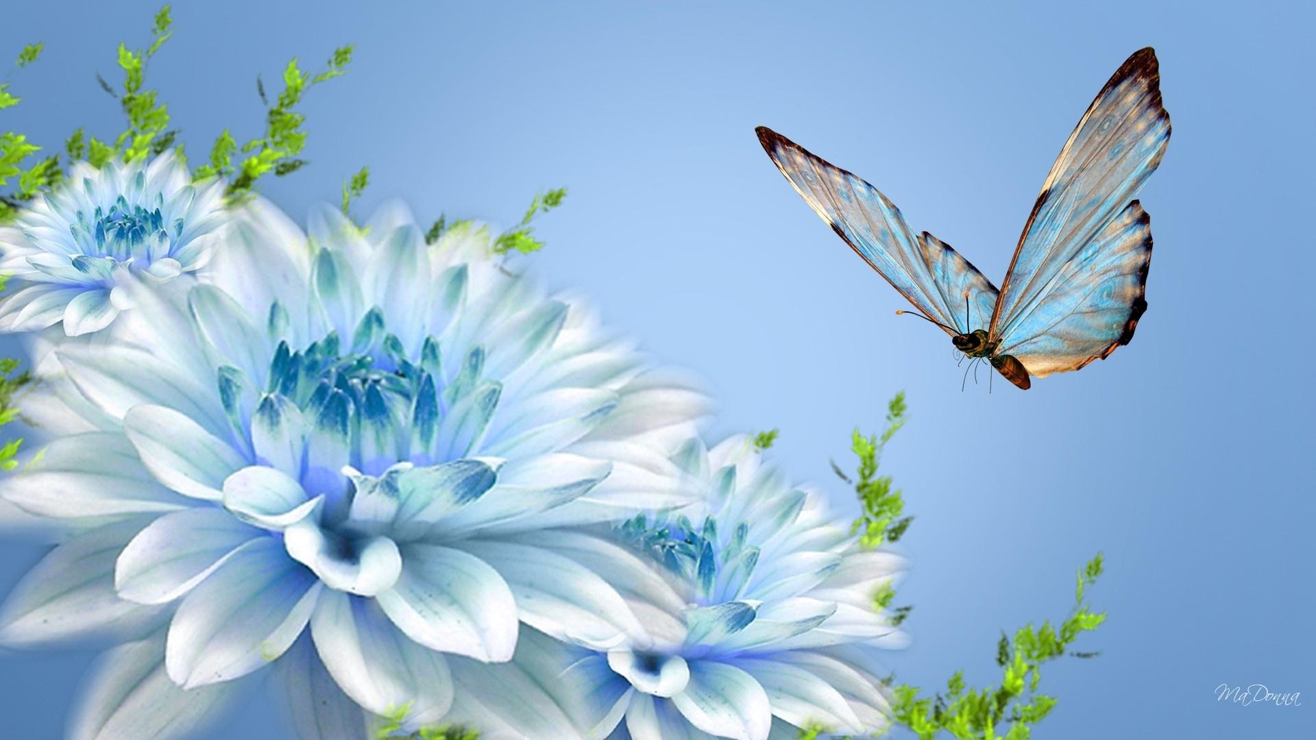 Скачать бесплатно обои бабочки на рабочий стол   подборка (4)