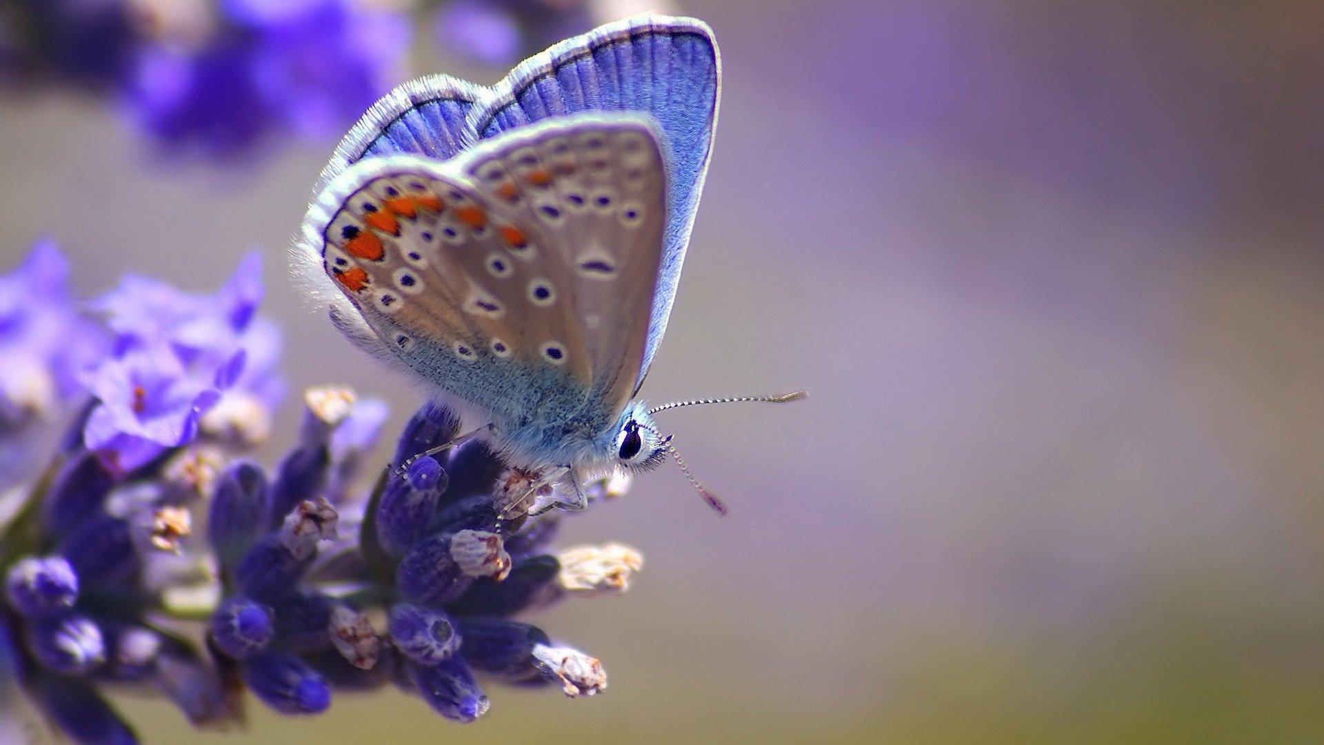 Скачать бесплатно обои бабочки на рабочий стол   подборка (5)
