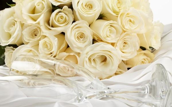 Скачать картинки белые розы   подборка 002