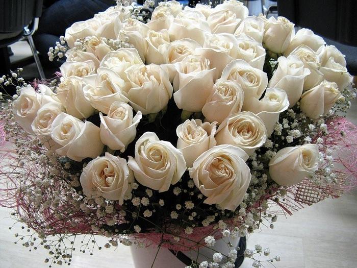 Скачать картинки белые розы   подборка 018