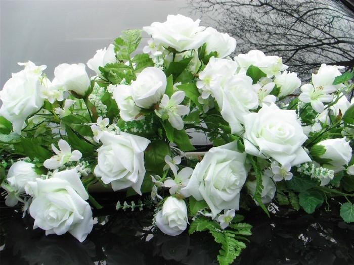 Скачать картинки белые розы   подборка 022