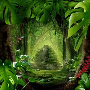 Скачать картинки бесплатно лес   подборка 026