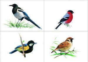 Скачать картинки какие птицы зимуют на урале   подборка 027