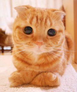 Скачать картинки с нарисованными котами 028