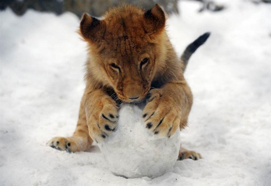 красивые картинки животных в снегу облегающем фасоне юбки