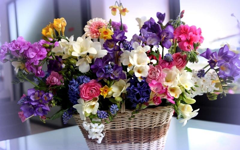 Скачать красивые фото цветов в высоком качестве   сборка (1)