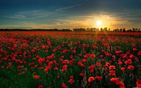 Скачать красивые фото цветов в высоком качестве   сборка (10)