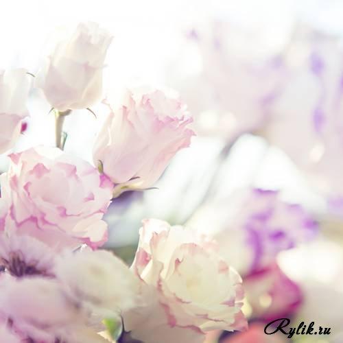 Скачать красивые фото цветов в высоком качестве   сборка (11)