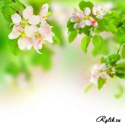 Скачать красивые фото цветов в высоком качестве   сборка (12)