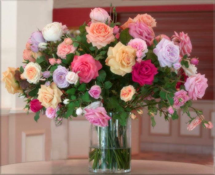 Скачать красивые фото цветов в высоком качестве   сборка (13)