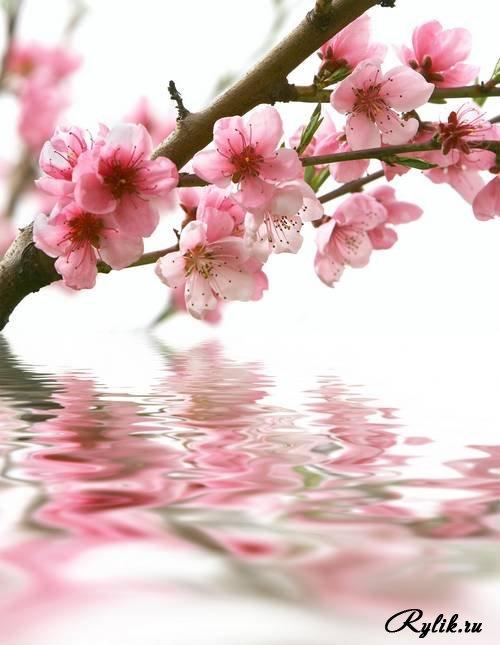 Скачать красивые фото цветов в высоком качестве   сборка (15)