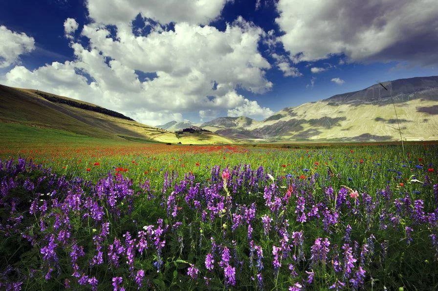 Скачать красивые фото цветов в высоком качестве   сборка (17)