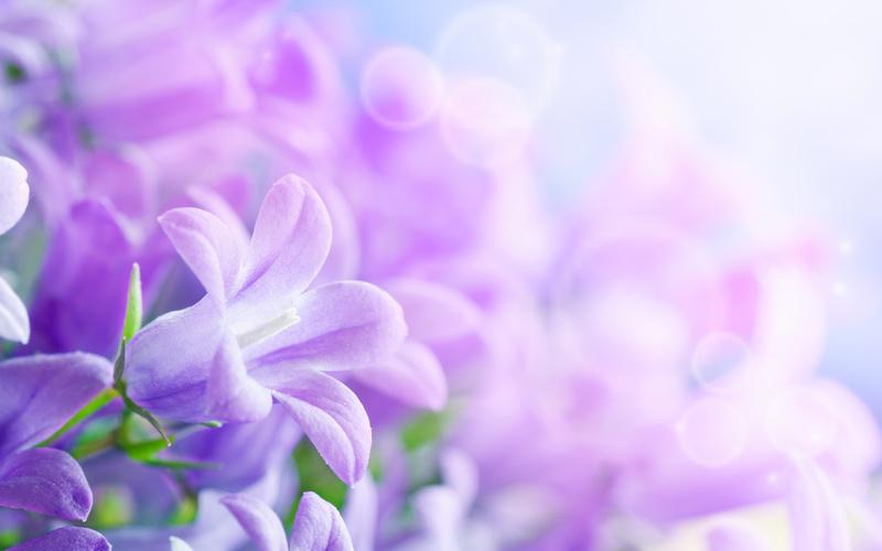 Скачать красивые фото цветов в высоком качестве   сборка (19)