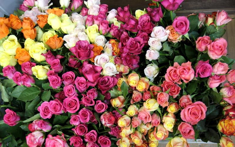 Скачать красивые фото цветов в высоком качестве   сборка (2)
